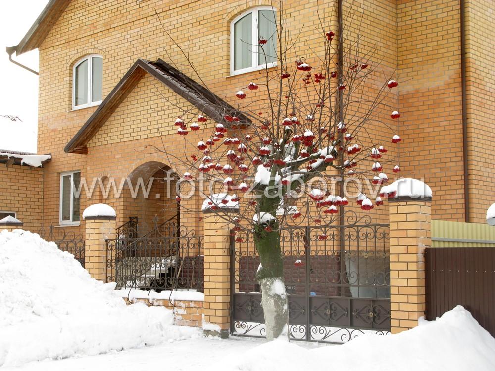 У въезда в кованые ворота коттеджа растет рябина с ярко-красными зимними