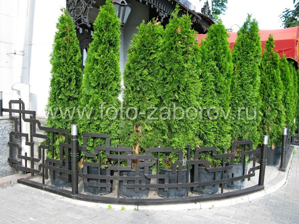 За полукруглой железной оградой - красивый ряд деревьев в искусственном