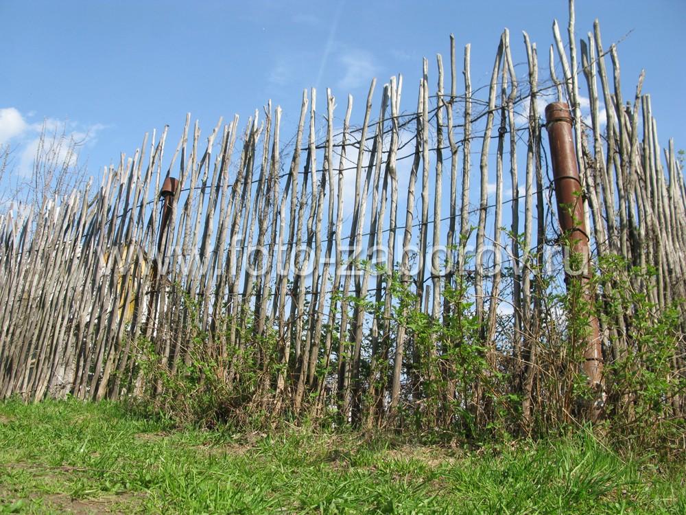 Фото Простейшая ограда - плетёнка из лозы вокруг огорода. Такую плетёнку может сделать каждый