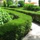 Живая изгородь из можжевельника в курортной зоне образует целую сеть живых дорожек-коридоров.
