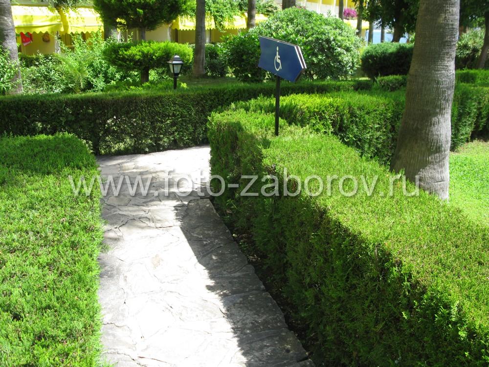 Фото Живая изгородь из можжевельника в курортной зоне образует целую сеть живых
