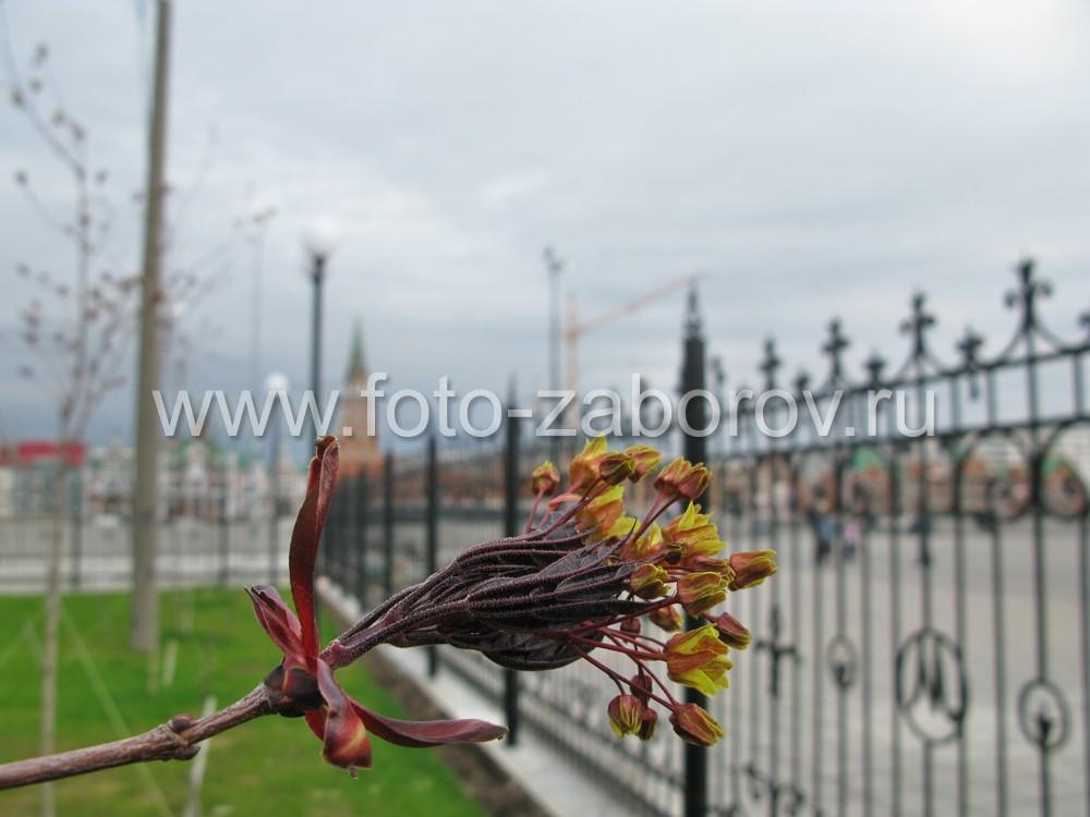 Фото Изящный кованый забор с вензелями ограждает парк на берегу рукотворного Амстердама в