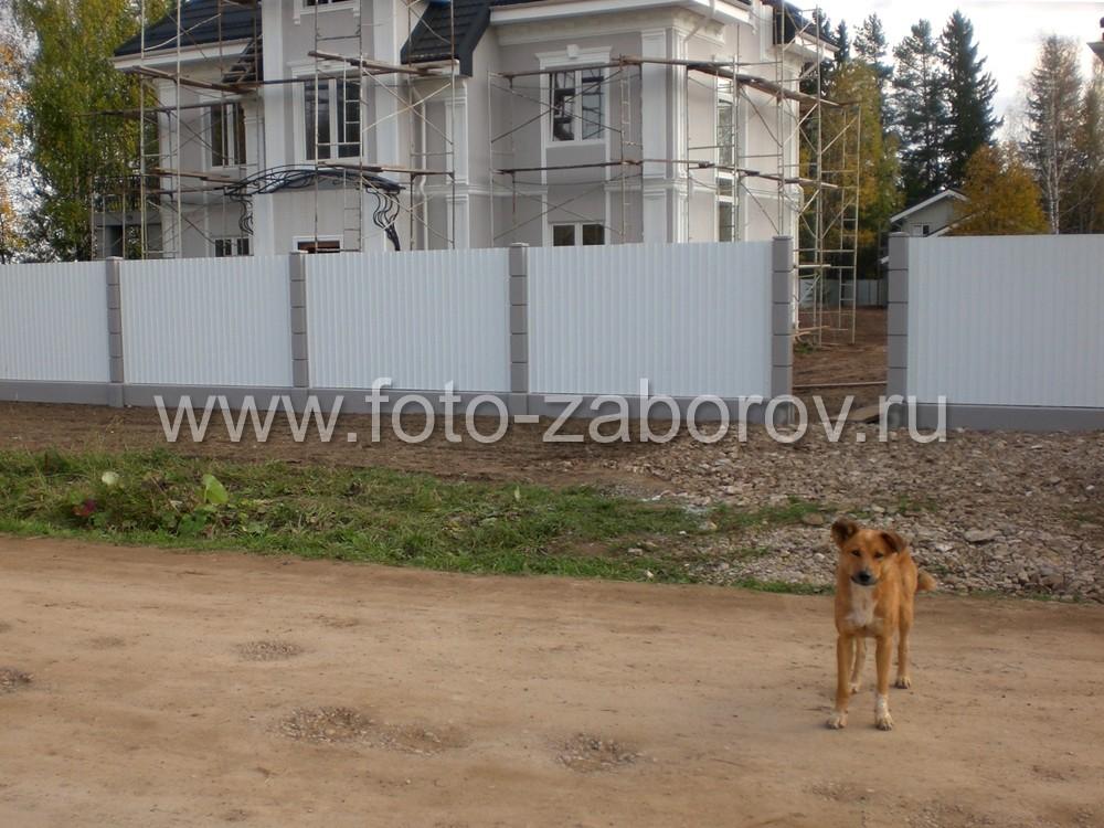 Живое усиление охраны коттеджа: пес + забор = дом под защитой