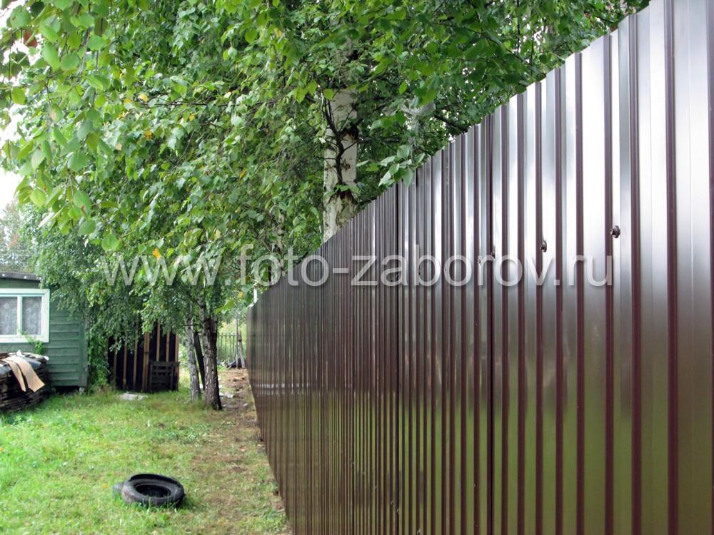 Фото Бюджетный забор из профнастила на трёх лагах в СНТ