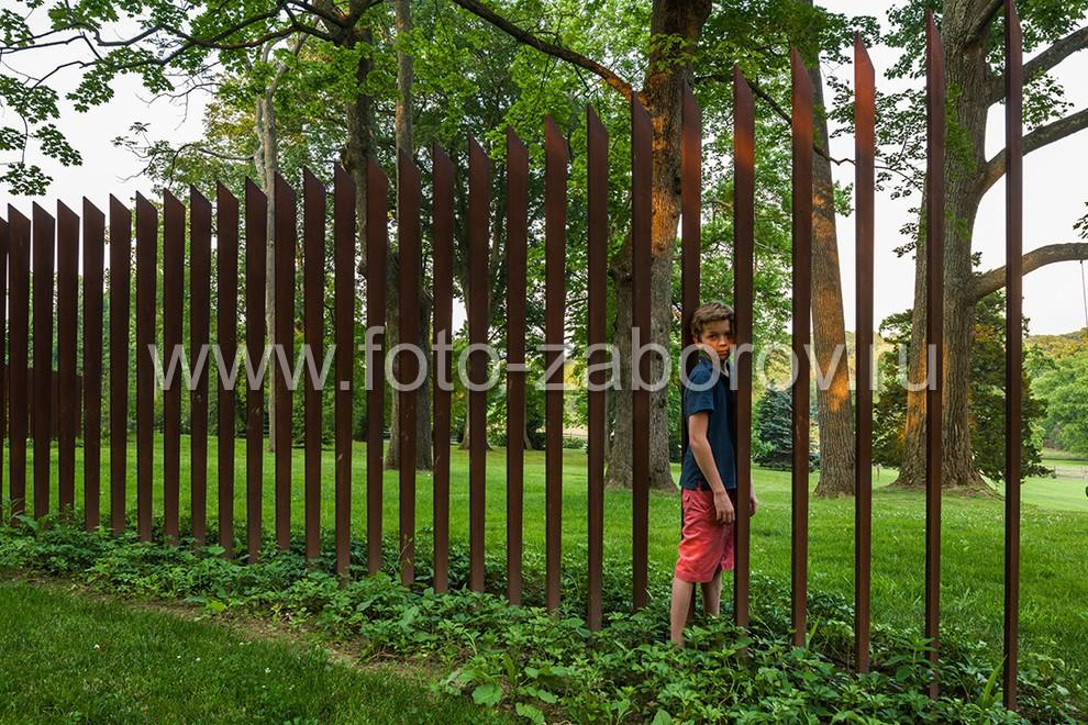 Местный Мишка Квакин, гроза садов и огородов, пробирается за очередной партией пенсильванских