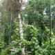 Шпалера для вьющихся растений из металлических труб - простейший способ возведения вертикального сада.