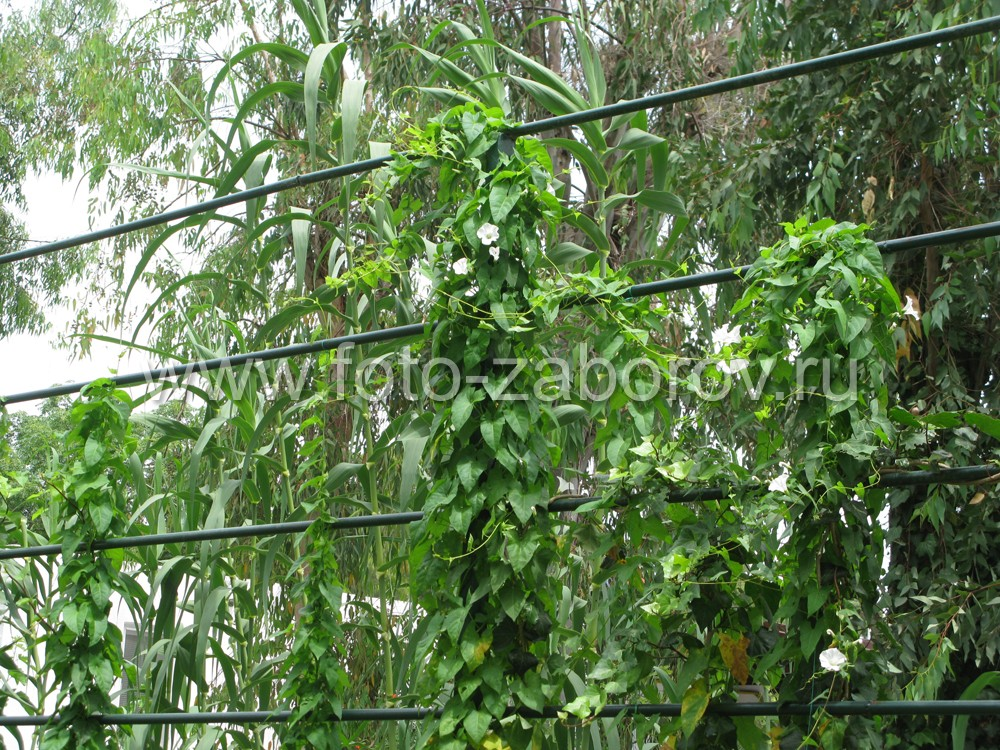 Фото Шпалера для вьющихся растений из металлических труб - простейший способ возведения