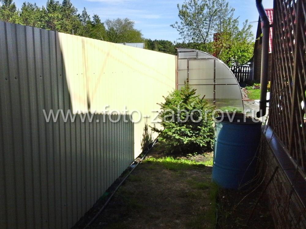 Фото Забор из профнастила вместе с пристенной теплицей - удачное