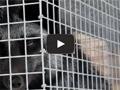 «Лепсе» - клетки для звероводства (производство пушнины песцов и лисиц).